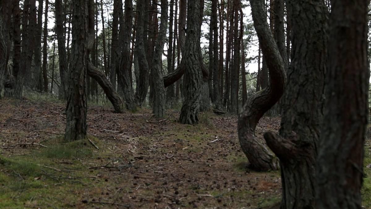 Bosque Danzante de Rusia