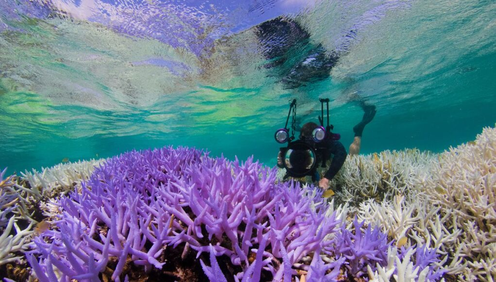 Adobe y Pantone están trabajando para salvar los arrecifes de coral