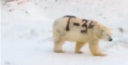 Oso polar en Rusia puede morir después de ser pintado con spray de graffiti negro