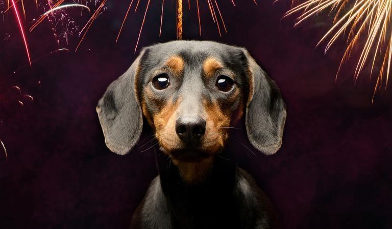 ¿Cómo proteger a tu mascota durante los fuegos artificiales de las fiestas de Diciembre?
