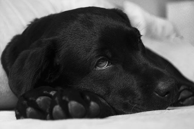 10 señales de advertencia para llevar a tu perro al veterinario