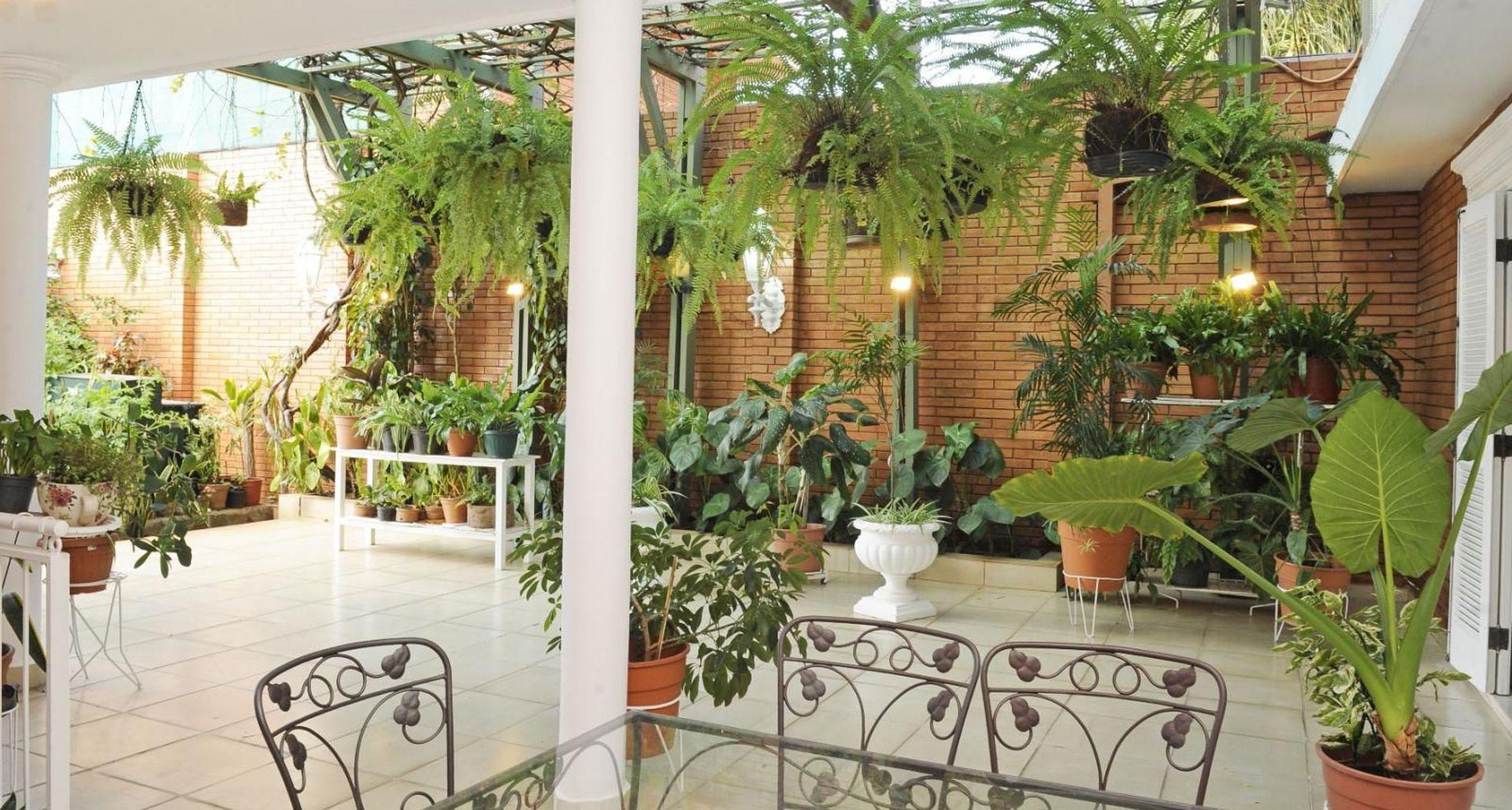 Plantas para tener en casa 2