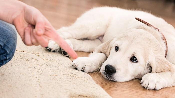 Entrenar un perro
